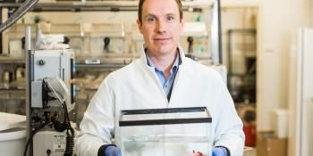 Study Finds Immune System Is Critical To Regeneration