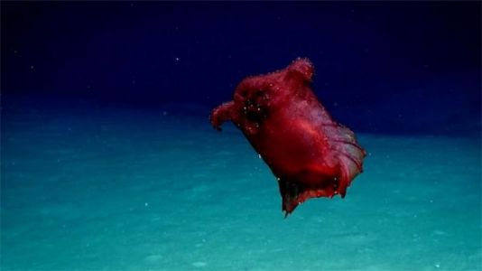 'Headless Chicken Monster' Spotted in Southern Ocean