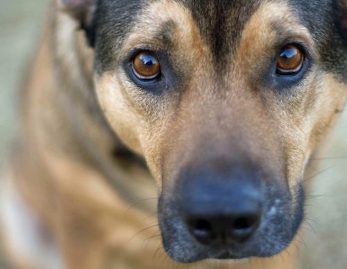 Dog personalities can shift just like those of humans, study says