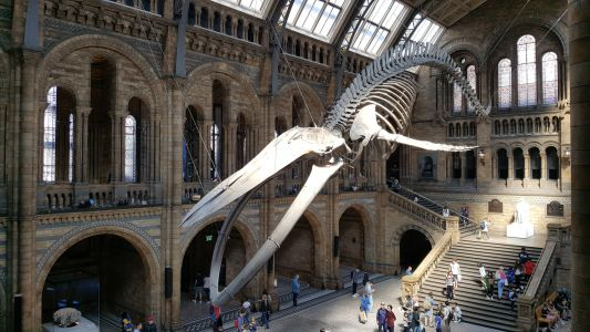 Kensington's big three museums announce their reopening dates