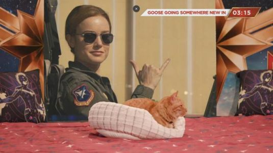 Goose the Cat from Captain Marvel's livestream left us wanting more