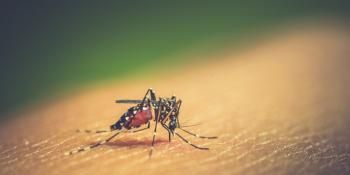 Researchers Explore New Way of Killing Malaria in the Liver
