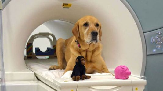 Move Over, Pavlov: Dogs Can Understand Human Words