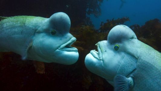 Blue Planet 2 is iPlayer's most popular show of the year - and now it's in 4K